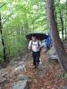 kroz šumu